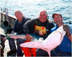 Shark Fishing - Cork Harbour Boats